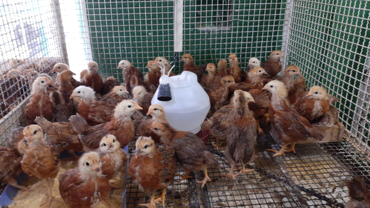 Produtos Agropecuários em Porto Velho - CASA do CAMPO